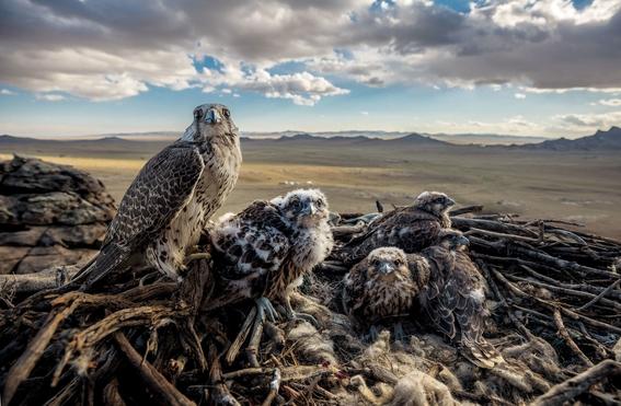 mejores fotografias del reino animal del 2018 de natgeo 18
