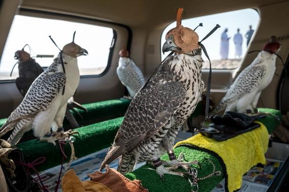 mejores fotografias del reino animal del 2018 de natgeo 20