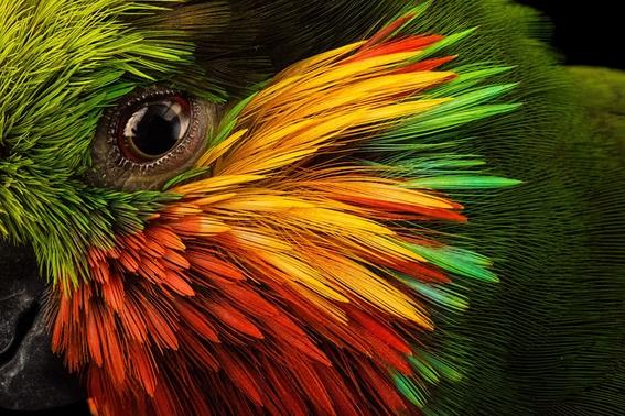 mejores fotografias del reino animal del 2018 de natgeo 23