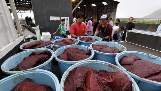 japon retomara oficialmente la caza comercial de ballenas 4
