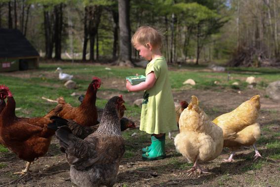 tener mascotas en la infancia ayuda a no desarrollar alergias en la adultez 4