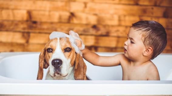tener mascotas en la infancia ayuda a no desarrollar alergias en la adultez 3