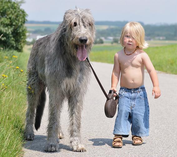 tener mascotas en la infancia ayuda a no desarrollar alergias en la adultez 2
