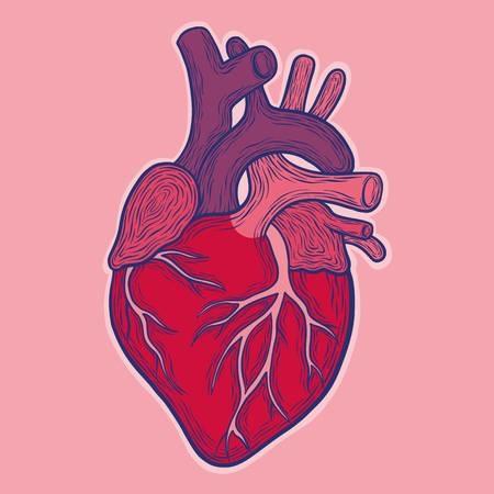 experto unam asegura que hay diferencia entre corazon de mujeres y hombres 1