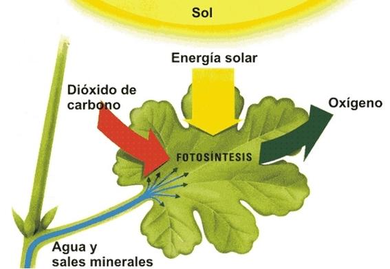 cientificos desarrollan mecanismo fotosintesis plantas para aumentar cultivos 1