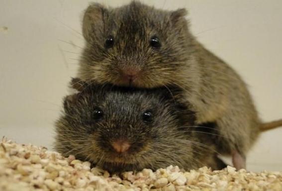 cientificos hacen investigacion de monogamia en especies evolucion 1