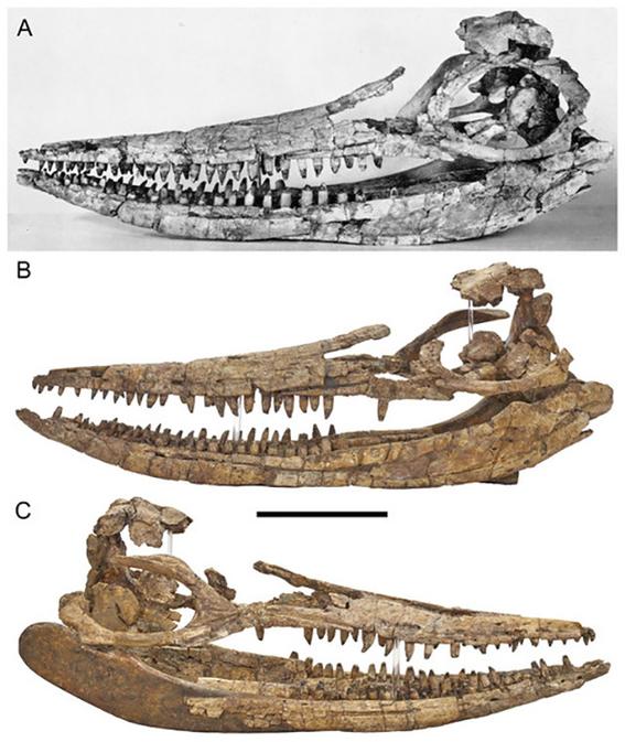 revelan como era el monstruo marino prehistorico protoichthyosaurus prostaxalis 3