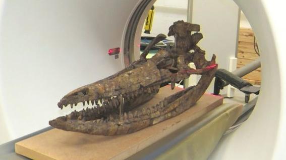 revelan como era el monstruo marino prehistorico protoichthyosaurus prostaxalis 2
