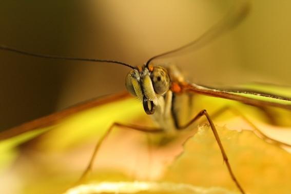 descubren una proteina que podria hacer desaparecer a los mosquitos 1