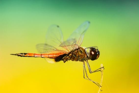 descubren una proteina que podria hacer desaparecer a los mosquitos 2
