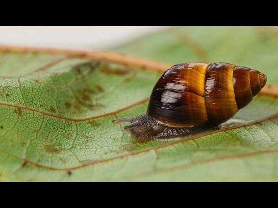 muere el caracol george el ultimo de su especie 2