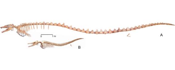 encuentran ballena dentro de otra ballena de hace 35 millones de anos 1
