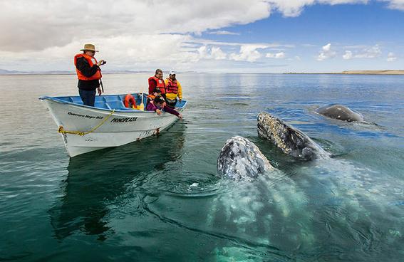 ballena gris 4