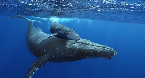 ballena gris 3