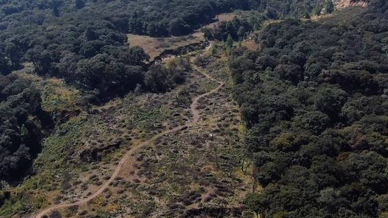 200 mil arboles en peligro por construccion de casas en el edomex 2