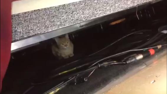 mananero el gato que espia a amlo en las conferencias de prensa 1