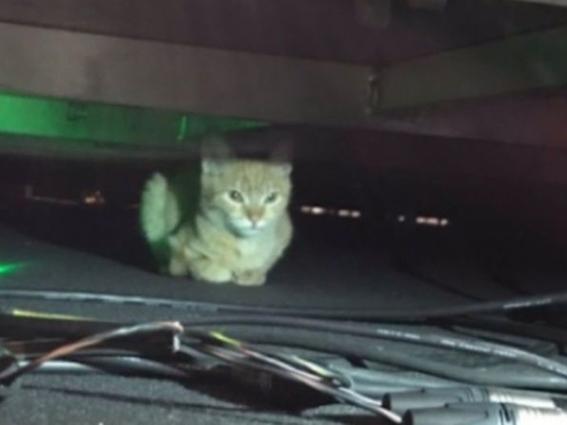 mananero el gato que espia a amlo en las conferencias de prensa 2