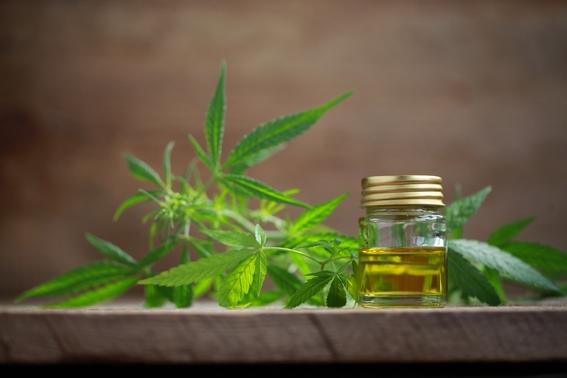 fumada paradoja entre marihuana medicinal y super bowl 2