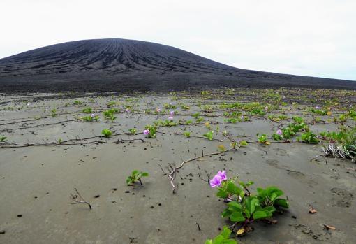 nasa organiza una expedicion a una isla que se formo en el pacifico 2