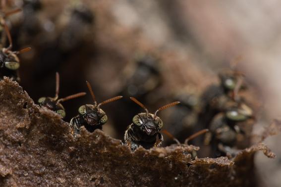 estudio advierte de extincion masiva de insectos por agricultura 1