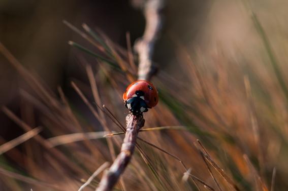 estudio advierte de extincion masiva de insectos por agricultura 2