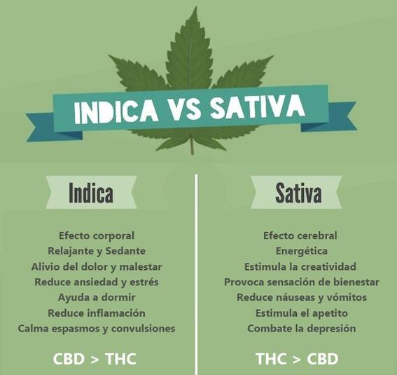 por que es importante legalizar la marihuana 2