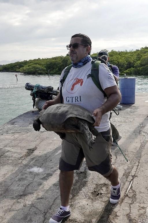 tortuga que se creia extinta es encontrada en la isla galapagos 1