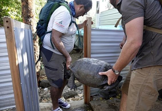 tortuga que se creia extinta es encontrada en la isla galapagos 2