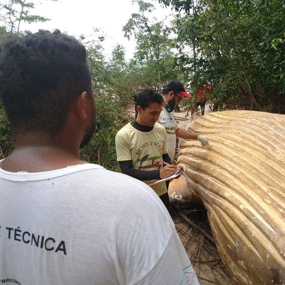 hallan ballena muerta en selva del amazonas 2