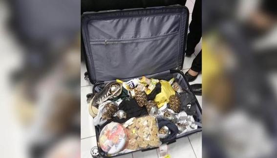 mas de mil 500 tortugas fueron encontradas amarradas en una maleta 2