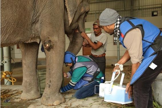 elefante entrando al hospital de wildlife sos 1
