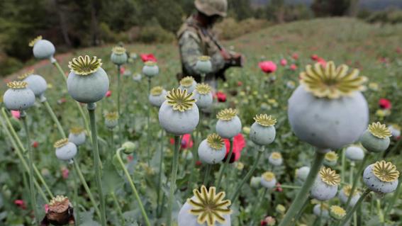 nuevas drogas en mexico tienen alerta a la onu 2