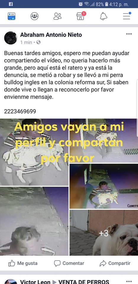 robo de mascotas en mexico 1