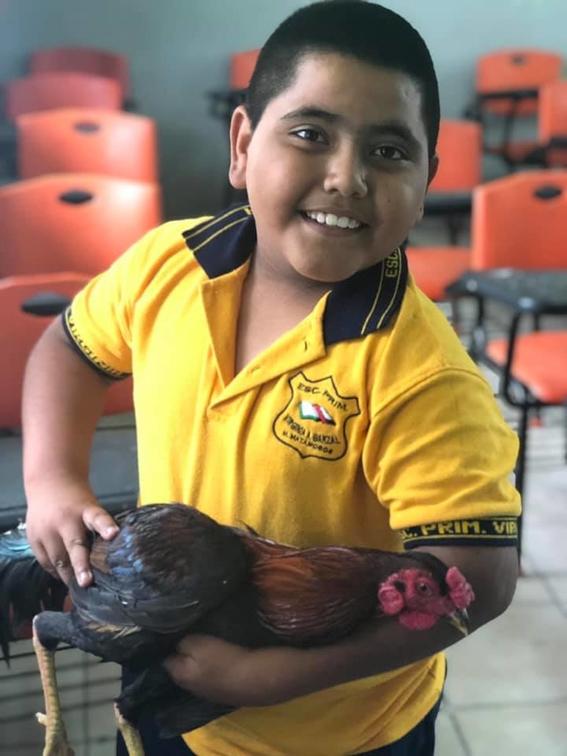 alumno regala un gallo a maestra cumpleanos 2