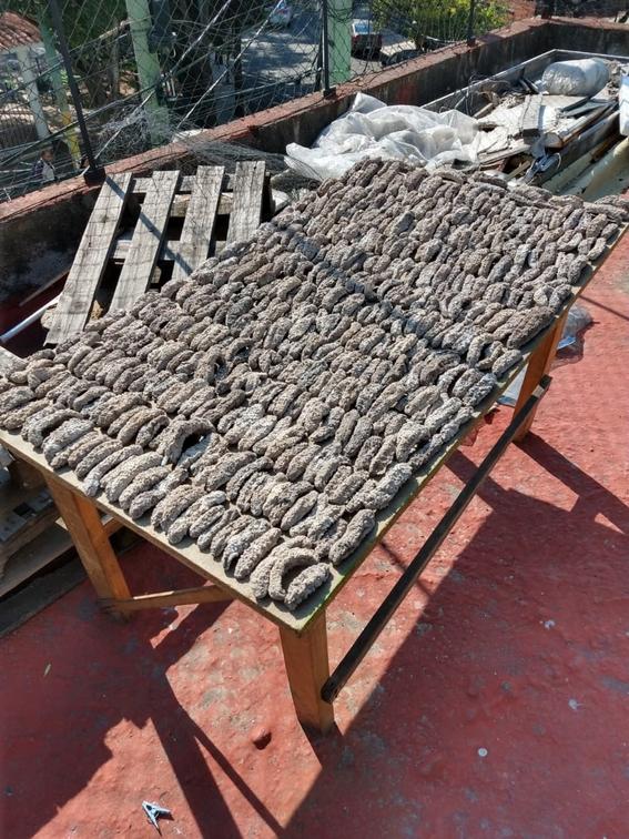 aseguran en cdmx mas de mil caballitos y pepinos de mar 2