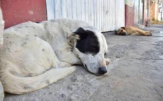 perro abandonado 1