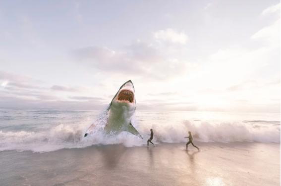 tiburones en mexico 2
