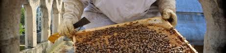 abejas victimas del incendio de notre dame 2