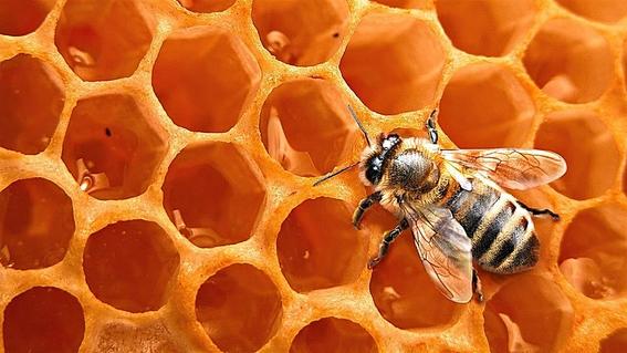 presenta unam parche de miel que evita amputaciones en pacientes diabeticos 1