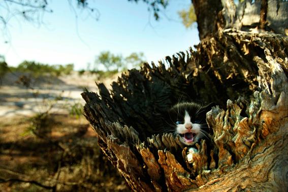 2 millones de gatos salvajes seran sacrificados en australia 1