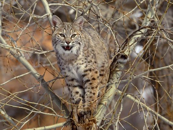 2 millones de gatos salvajes seran sacrificados en australia 2
