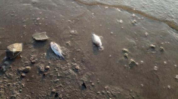 peces muertos en la presa san jose 2