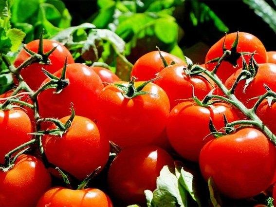 productores de tomate contra donald trump 2