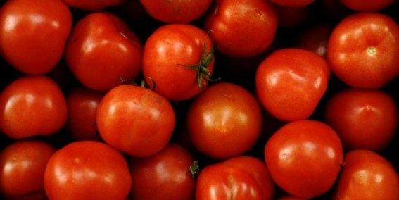 productores de tomate contra donald trump 3