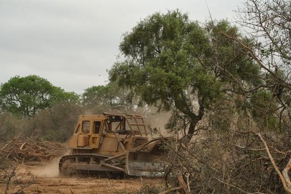 deforestacion en mexico 1