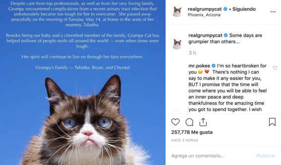 muere grumpy cat la gatita protagonista de cientos de memes 2