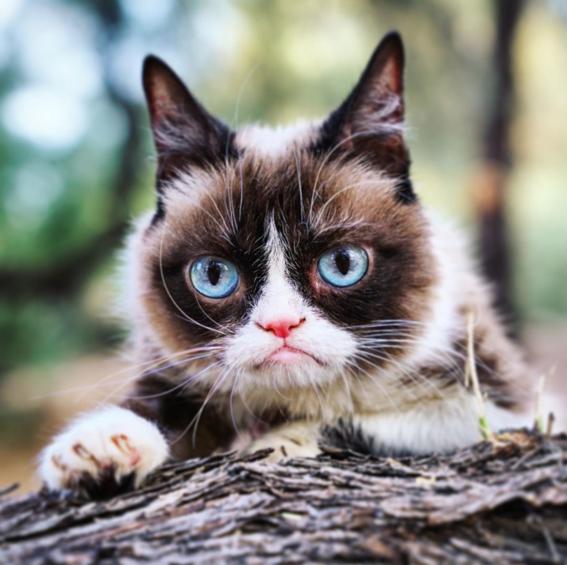 muere grumpy cat la gatita protagonista de cientos de memes 1