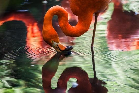 flamingos maltrados 1