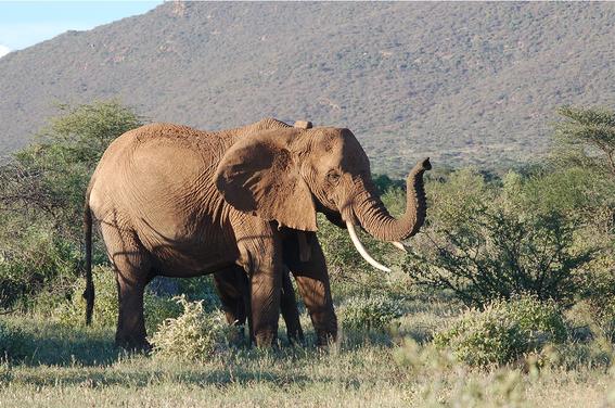 quitan la prohibicion de caza de elefantes en botswana 3
