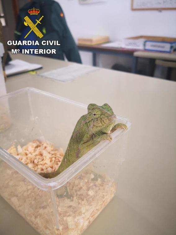 rescatan miles de reptiles que terminarian siendo bolsas de mano 1